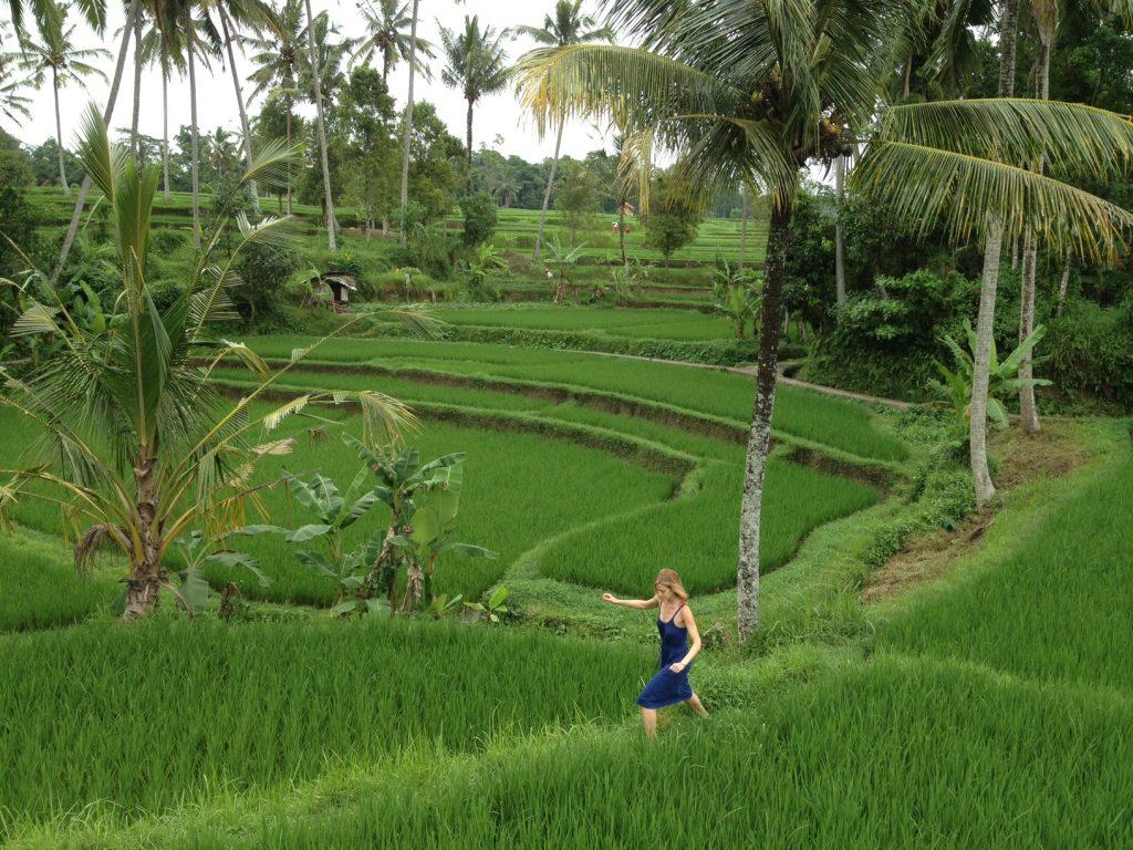 ubud rice field run